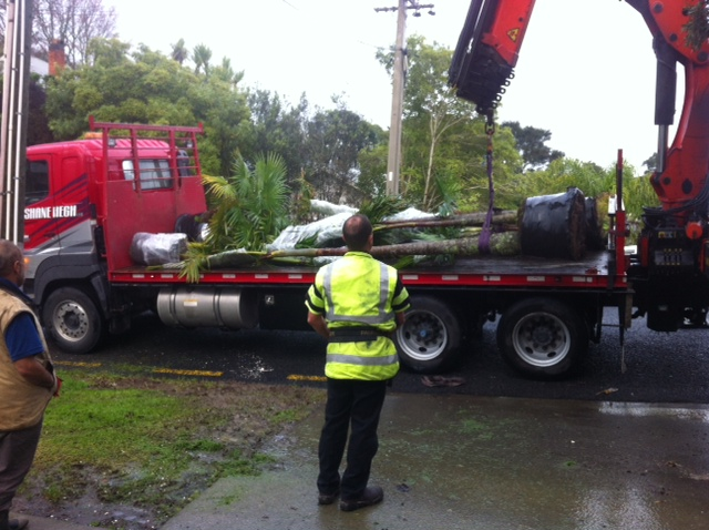 Palm Tree Hiab Lift and Transport
